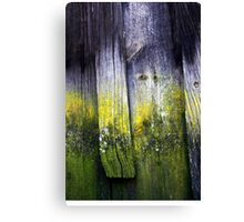 Wood from History Canvas Print