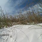 Sand, Wind and Reeds - Clearwater Beach, Florida by Danielle Ducrest