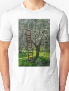 Red Ladder, olive pruning, Acquedotto Romano, Spello, Umbria, Italy T-Shirt