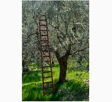 Red Ladder, olive pruning, Acquedotto Romano, Spello, Umbria, Italy Unisex T-Shirt