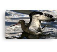 The Black Tailed Godwit Canvas Print