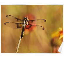 Dragon Wings in the Flower Patch Poster