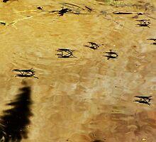 Water Skippers by trueblvr