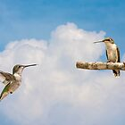 two hummers b by RosiesPhotos