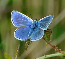 Blue ? by Russell Couch