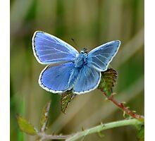 Blue ? Photographic Print