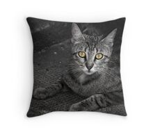 Stray Cat Throw Pillow
