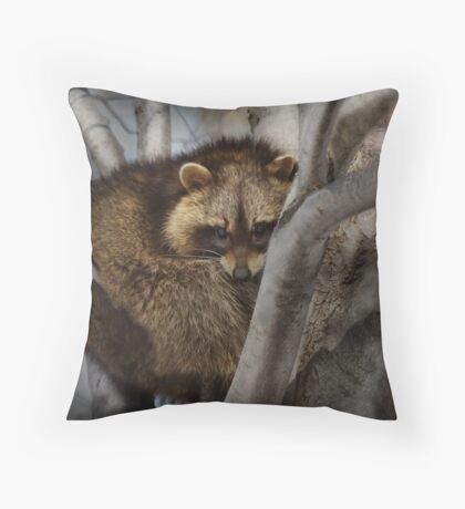 Raccoon in Tree Throw Pillow