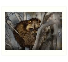 Raccoon in Tree Art Print