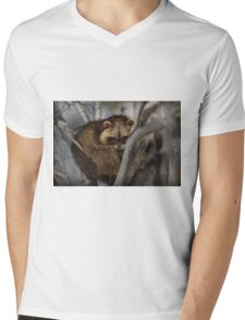 Raccoon in Tree T-Shirt