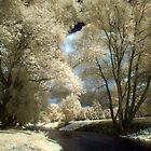 Polečnice Brook by Ethem Kelleci