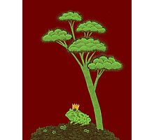 Frog Prince under a tree Photographic Print
