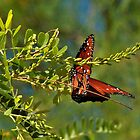Butterfly in the Arid Garden by Linda Gregory