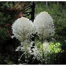 Bear Grass by Vickie Emms