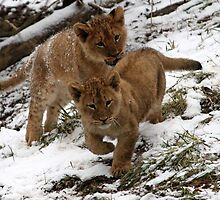 Growing Pride by Michelle Kempf