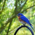 Mr. Blue by Judy Wanamaker