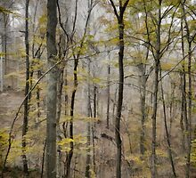 The Gray Area by SmarttImages