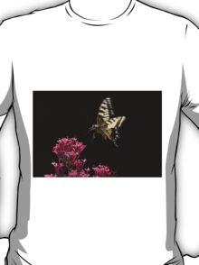 Swallowtail landing, Castiglioncello, Sarteano, Tuscany T-Shirt