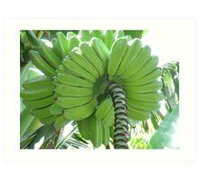 Going Bananas For You Art Print