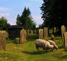 Sheep in a Churchyard, Edensor, Derbyshire, England by UGArdener