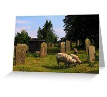 Sheep in a Churchyard, Edensor, Derbyshire, England Greeting Card