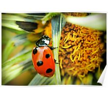 Lady bug @ work Poster