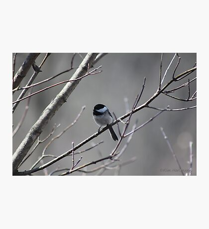 Feathered Companion Photographic Print