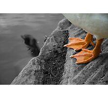 Goose feet Photographic Print
