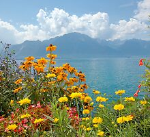 Montreux - walk of flowers by James  Monk