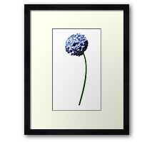 The beautiful blooming flower Framed Print