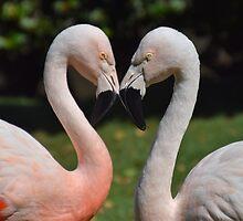Heart Shaped Flamingos by Melissa Kitano