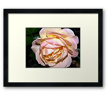 Ivory, pink and yellow Framed Print