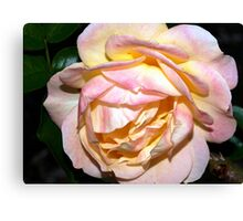 Ivory, pink and yellow Canvas Print