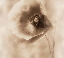 Blowing in the Wind 2 by Christine Lake