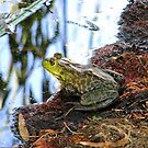 """Should I Jump"" Frog by Sherry Pundt"