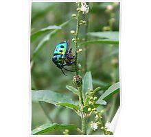 COLOURFULL Bug  Poster