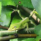 Insects Eaten by jumping Anole In The Bushes by JeffeeArt4u