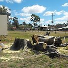 Meeting Place Loss of Moreton Bay Fig by 4spotmore