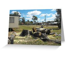 Meeting Place Loss of Moreton Bay Fig Greeting Card