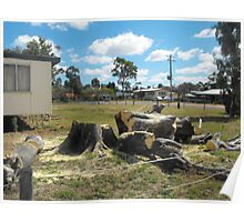 Meeting Place Loss of Moreton Bay Fig Poster