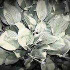 Plant by rachellynn89