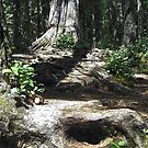 Root Path by Gene Ritchhart