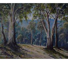Late Afternoon  Flinders Ranges Photographic Print