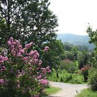Smoky Mountains-Garden of trees and shrubs-habitat by JeffeeArt4u