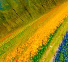 The Field by Carolann23