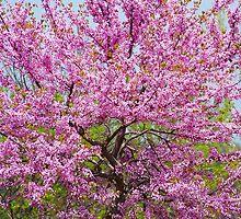 Spring Dream by Cynthia Chronister