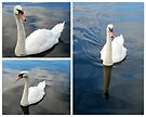 Graceful swans by ©The Creative  Minds
