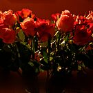 Roselight  by mikequigley