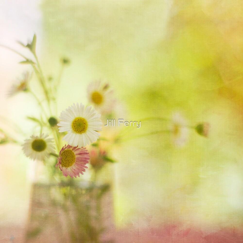 Sun Kissed Daisies by Jill Ferry