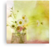 Sun Kissed Daisies Canvas Print